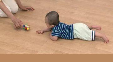 生後6か月 育脳 はいはい